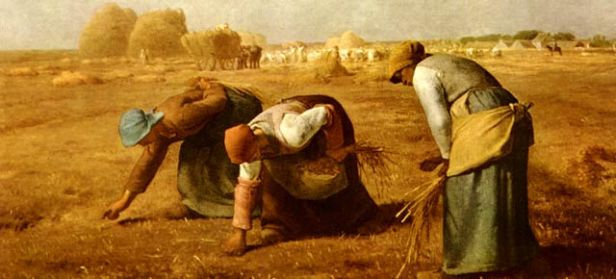 20121126_agricoltura-contadina2.jpg