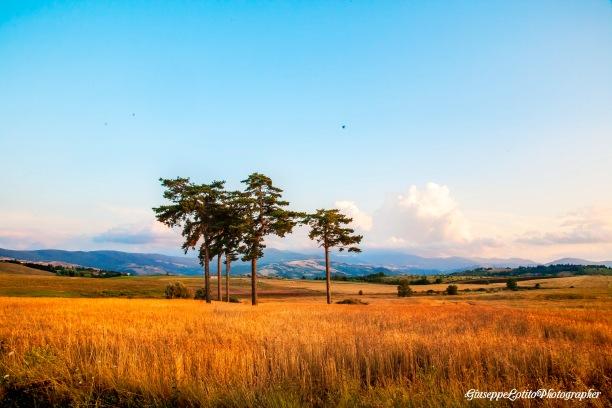 Immagine tratta da repertorio di Onda Lucana by Giuseppe Lotito Piani del Mattino Potenza panorama alberi_edited