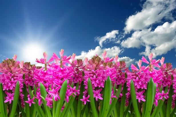 flower-3219718_960_720.jpg