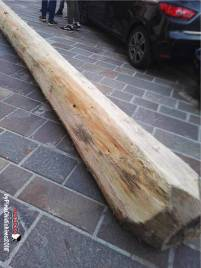L'albero lavorato e reso nudo.