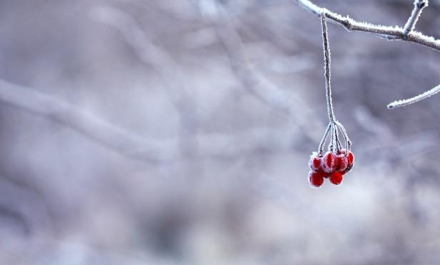 frozen-201495_960_720.jpg