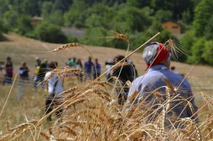 05 agosto VIII-Edizione Palio del grano Terranova di Pollino (pz)