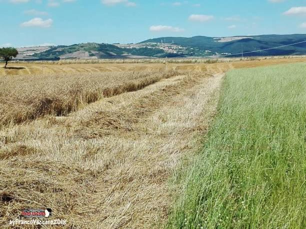 Immagine tratta da repertorio di Onda Lucana by Franco Vaccaro.jpg03
