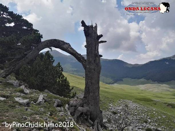 Immagine tratta da repertorio di Onda Lucana by Pina Chidichimo 2018.jpg06