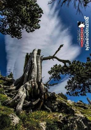 Immagine tratta da repertorio di Onda Lucana®by Saverio Olita