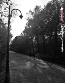 Immagine tratta da repertorio di Onda Lucana® by Antonio Prudente 09