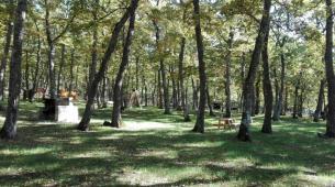 22 Aprile Albano di Lucania (pz) Parco Avventura