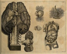 27 Aprile Giornata della Neuro prevenzione Terranova di Pollino (pz)