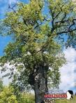 Immagine tratta da repertorio di Onda Lucana®by Paolo Varalla 2019 Viggiano Natura Viggianese.jpg000