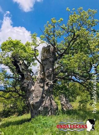 Immagine tratta da repertorio di Onda Lucana®by Paolo Varalla 2019 Viggiano Natura Viggianese.jpg0000
