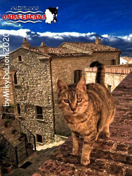 Immagine tratta da repertorio di Onda Lucana®by Miky Da Lioni 2020 a2s3