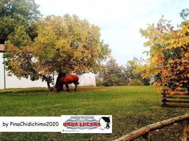 Immagine tratta da repertorio di Onda Lucana®by Pina Chidichimo 2020.jpg a