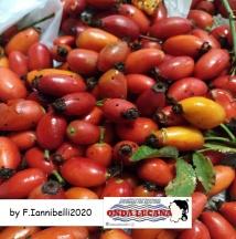 Immagine tratta da repertorio di Onda Lucana®by Franca Iannibelli 2020