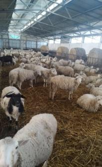 Azienda Agro zootecnica TOSA snc.jpeg4_edited.jp3